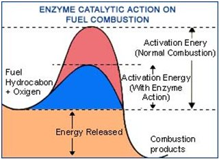 enzyme-catalytic-action